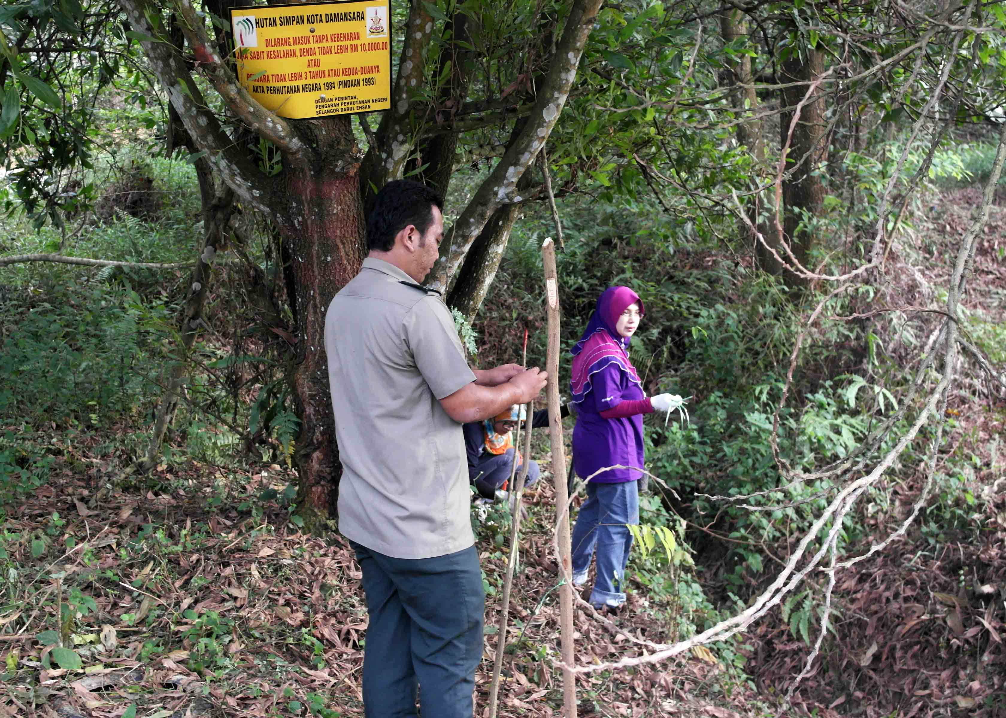 Selangor Forestry Staff helping GE volunteers